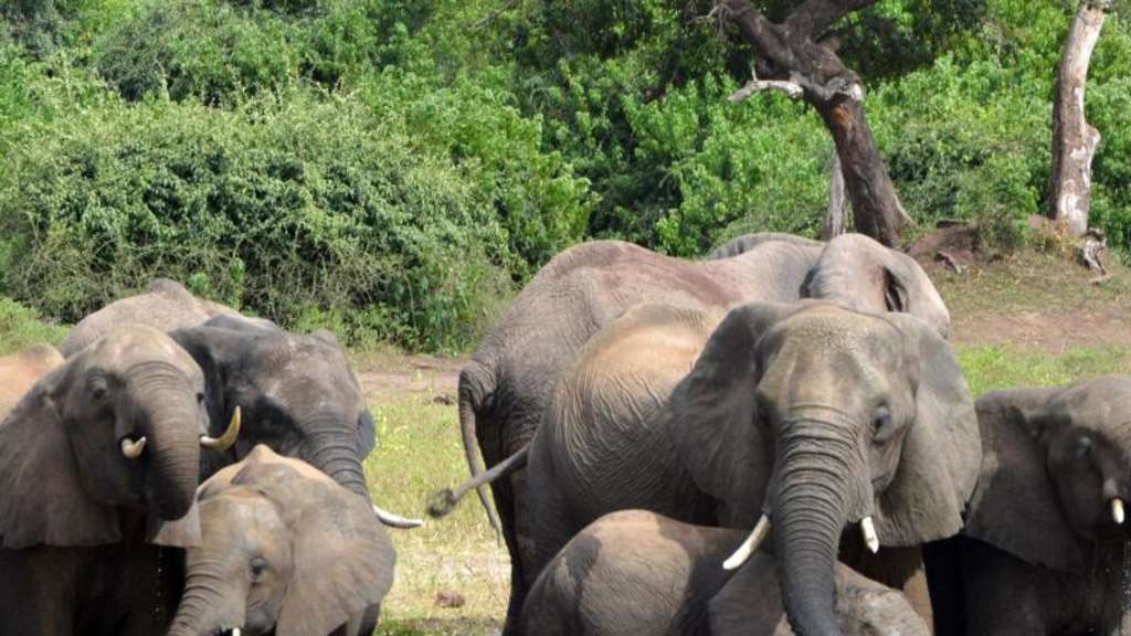 Elefantensterben Afrika